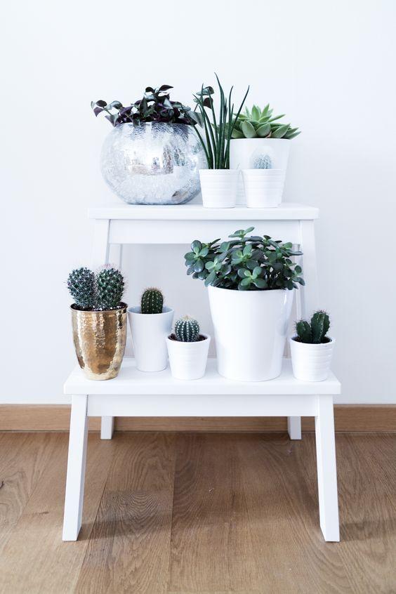 plantas 2